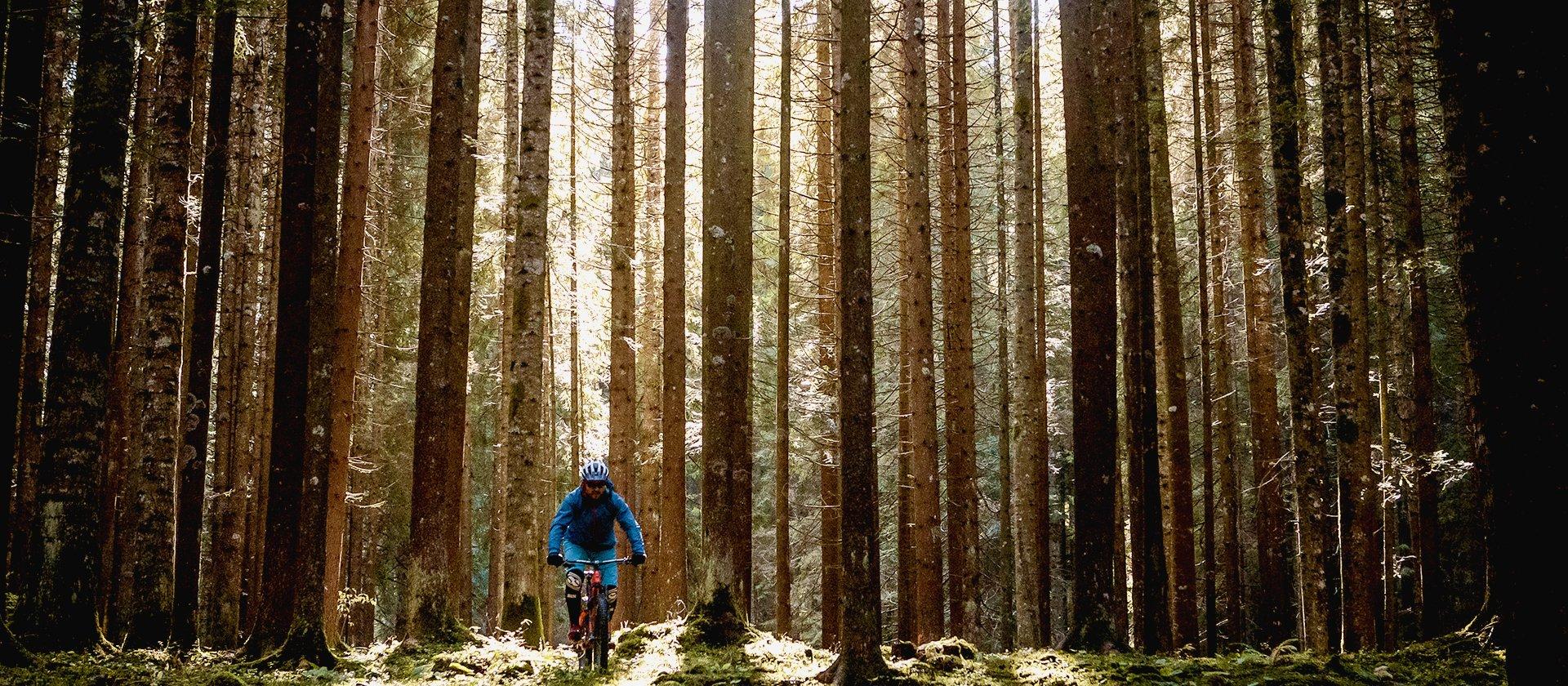 sentieri mtb nel bosco altopiano di asiago