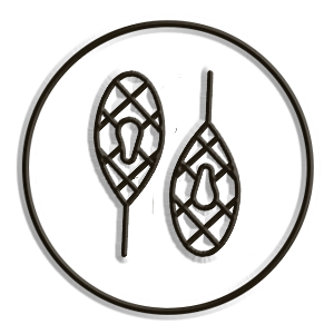 icona ciaspole