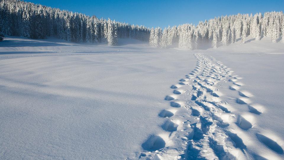 impronte sulla neve altopiano di asiago